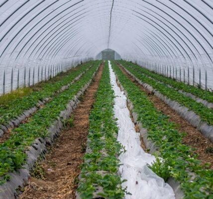 أحواض زراعية ذاتية الري